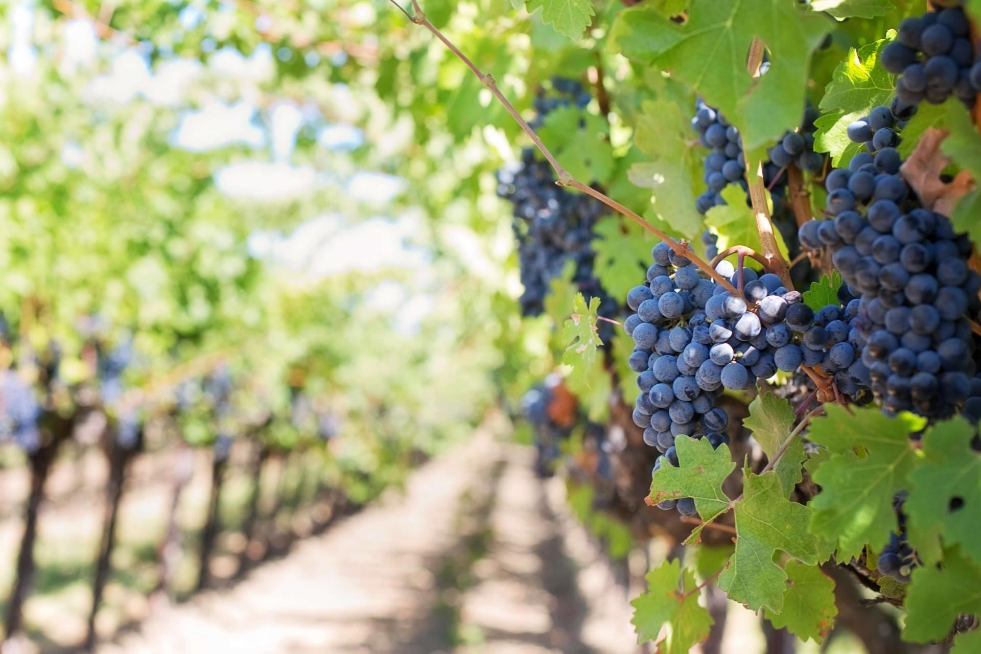 Enotourism: The Best Secrets For Wine Lovers enotourism Enotourism: The Best Secrets For Wine Lovers Jardins de Vinhas