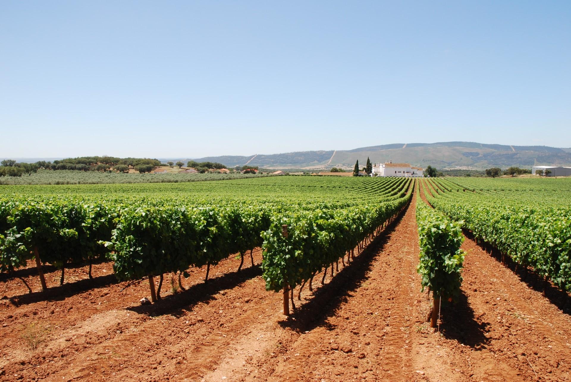 Enotourism: The Best Secrets For Wine Lovers enotourism Enotourism: The Best Secrets For Wine Lovers dsc 5738