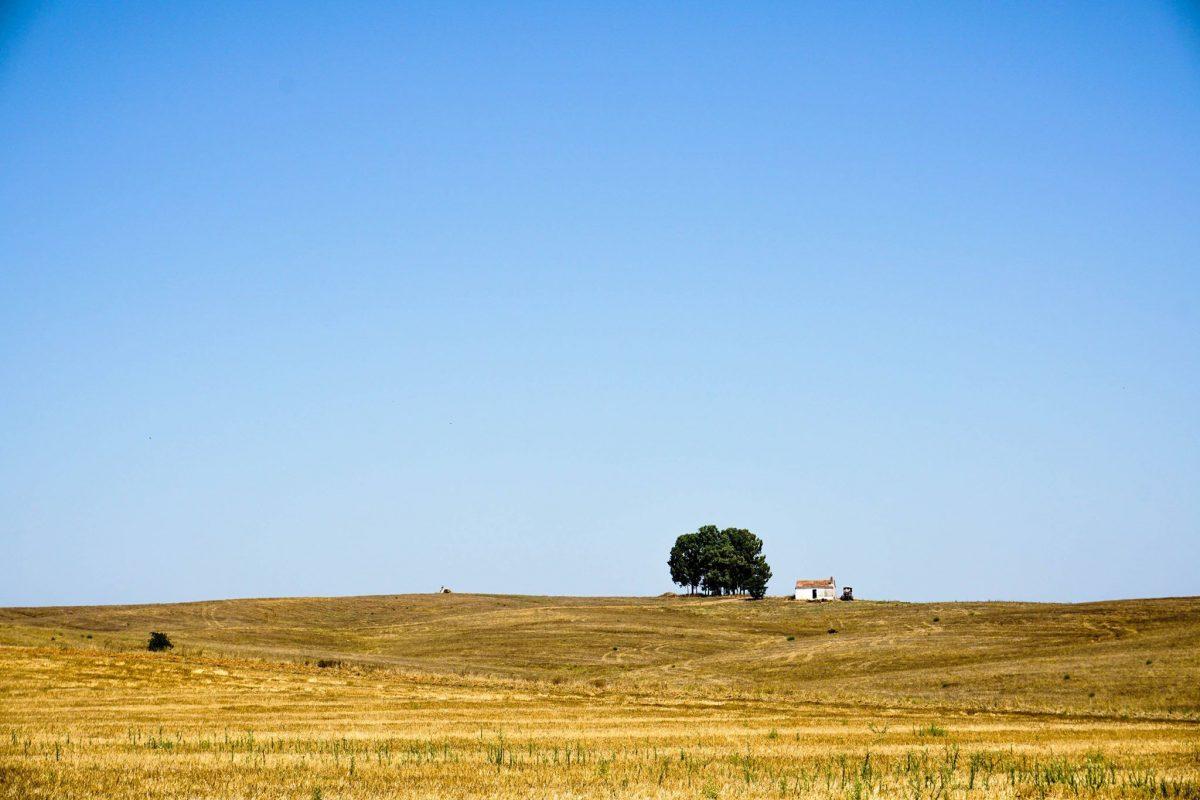 Secrets Itinerary: Discover The Extraordinary Alentejo Landscapes alentejo Secrets Itinerary: Discover The Extraordinary Alentejo Landscapes Vinho Alentejo e1564484831848