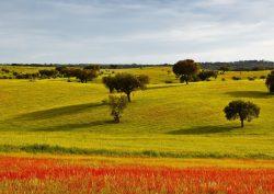 alentejo Secrets Itinerary: Discover The Extraordinary Alentejo Landscapes alentejo 1 250x177