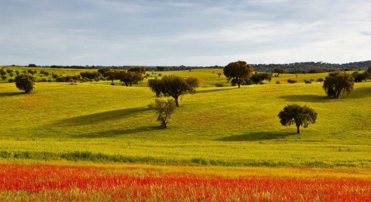 alentejo Secrets Itinerary: Discover The Extraordinary Alentejo Landscapes alentejo 1 750x410