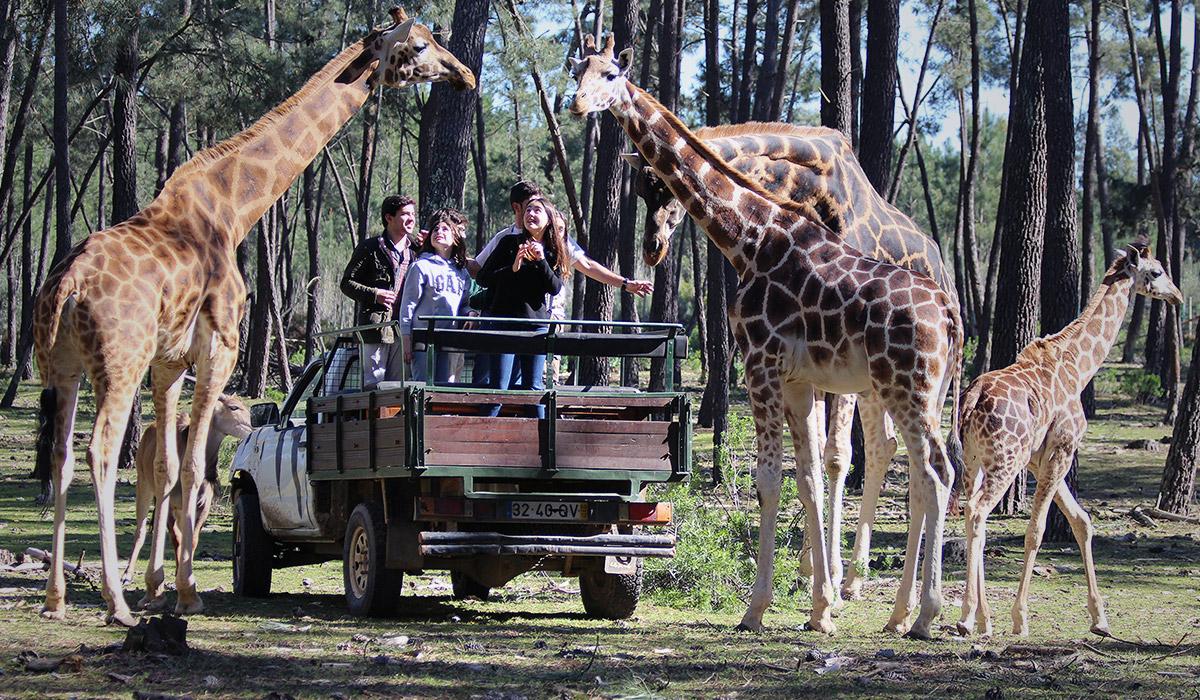 Secrets Itinerary: Discover The Extraordinary Alentejo Landscapes alentejo Secrets Itinerary: Discover The Extraordinary Alentejo Landscapes girafa vip 2