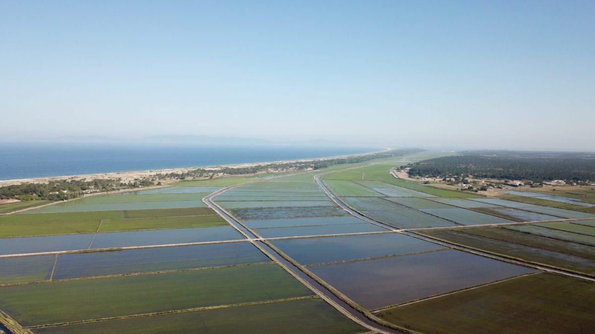 A Paradise Hidden In The Rice Fields Of Comporta: Discover Campo de Arroz comporta A Paradise Hidden In The Rice Fields Of Comporta: Discover Campo de Arroz org f331402ed40930cd 1529223964000 e1565362754114