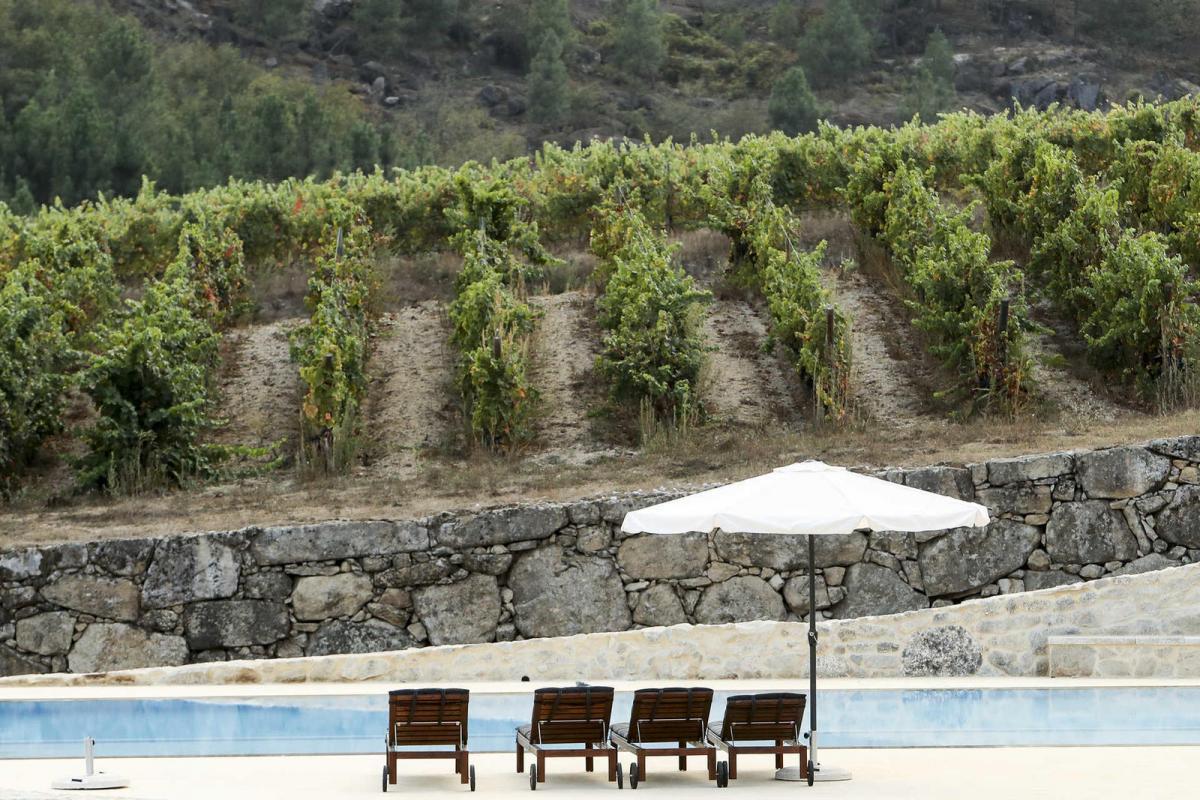 Rural Paradise With Dão Wines: Discover Quinta do Medronheiro Hotel hotel Rural Paradise With Dão Wines: Discover Quinta do Medronheiro Hotel 29163241 WEB 41729535 GI20092017FabioPoco1912 WEB