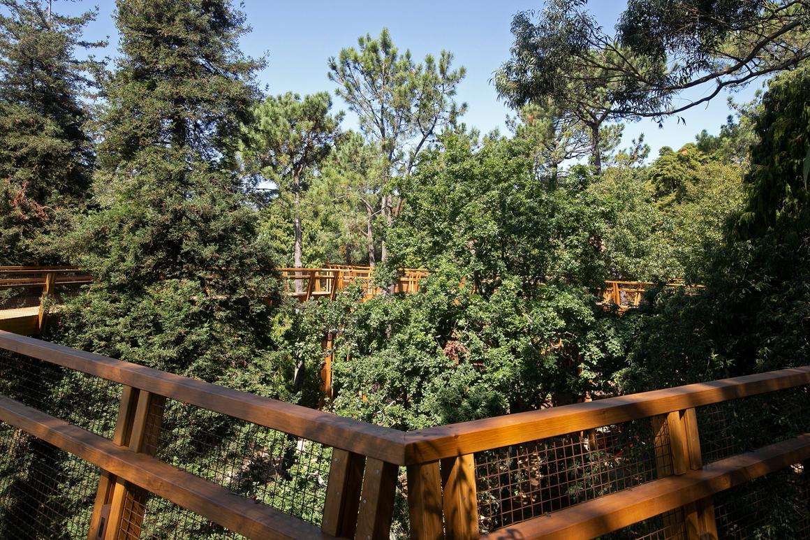Serralves Bets On Tree-Lined Walkway serralves bets on tree-lined walkway Serralves Bets On Tree-Lined Walkway DR TREETOP WALK