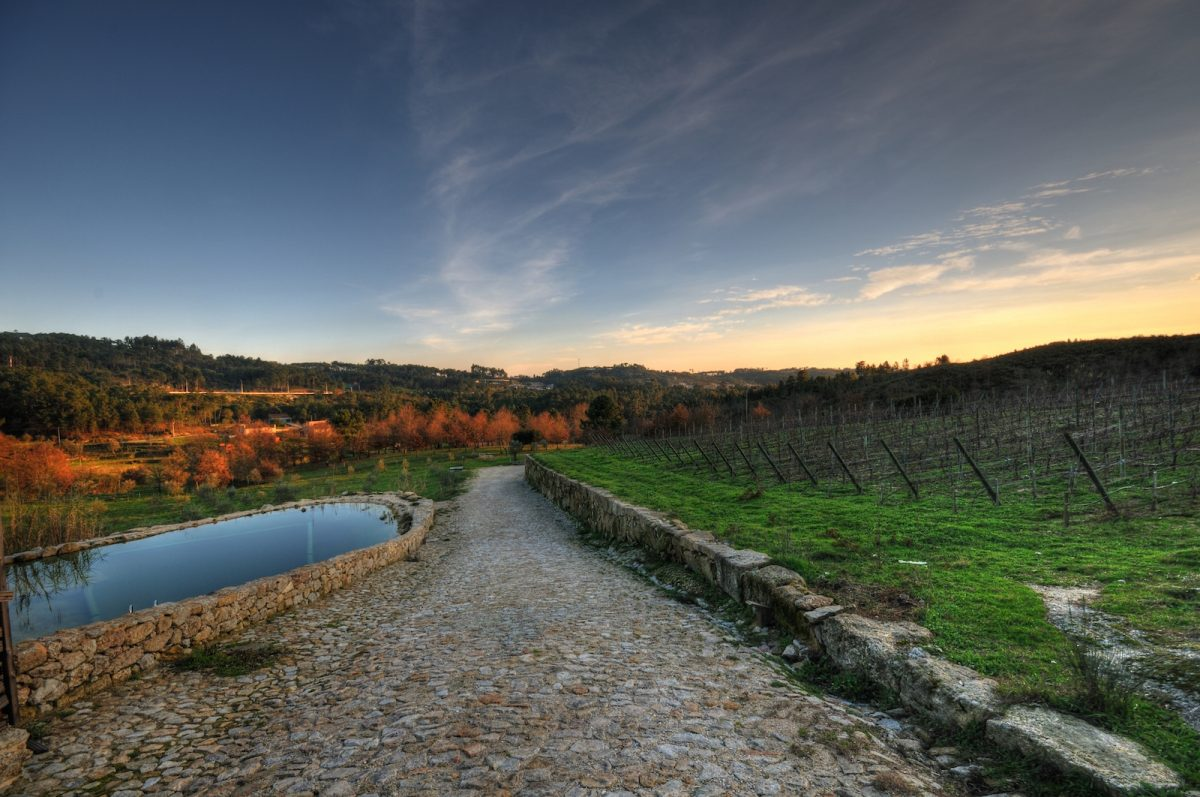 Rural Paradise With Dão Wines: Discover Quinta do Medronheiro Hotel hotel Rural Paradise With Dão Wines: Discover Quinta do Medronheiro Hotel dsc 3602 3 4 tonemapped copia e1568632354475