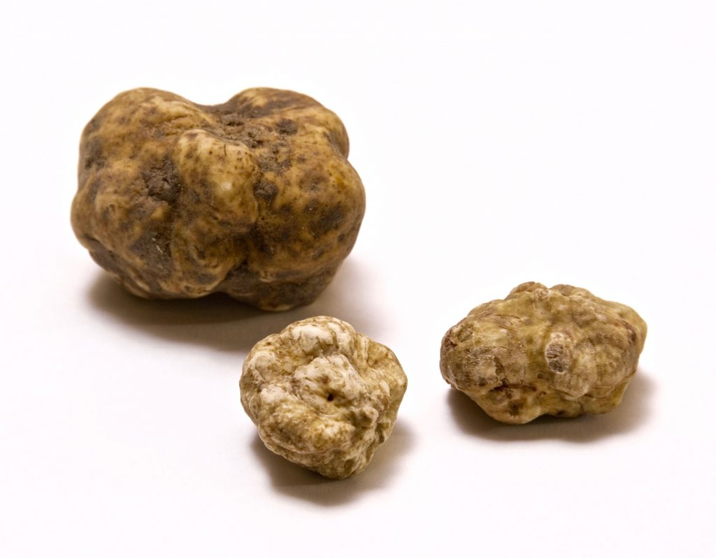 white truffle season The White Truffle Season Has Started At The Come Prima Restaurant In Lisbon The White Truffle Season Has Started At The Come Prima Restaurant In Lisbon 5 1024x799